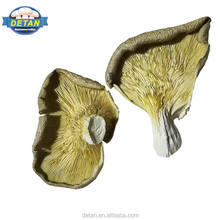 Detan Dried Oyster Mushroom Production