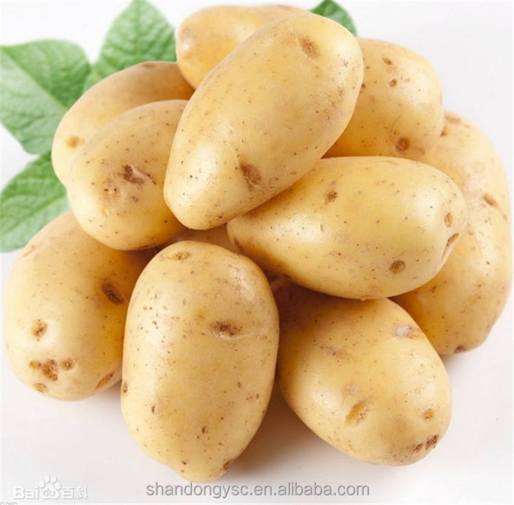 best large potato seeds for sale, sweet potato seed for export