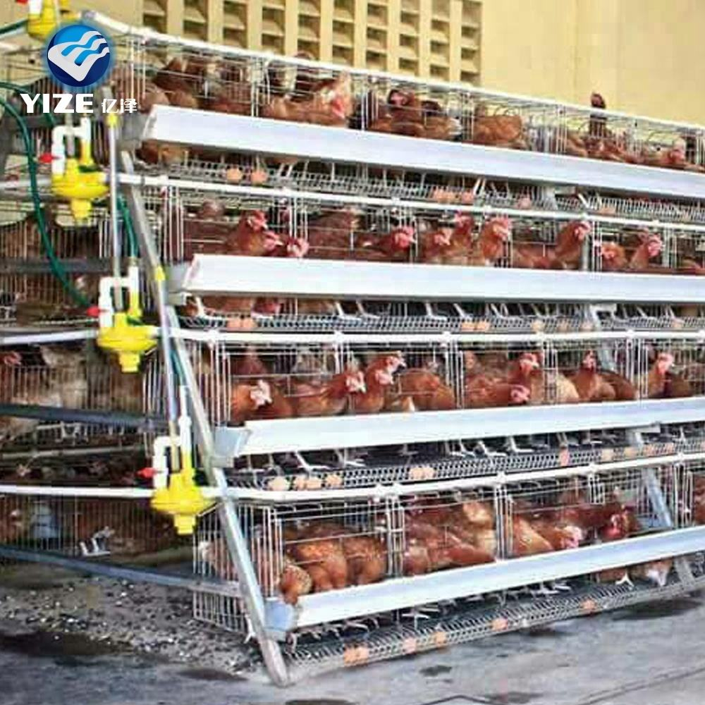 Chicken Layer Cages Automatic feeding equipment