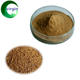 GMP Certified 100% Natural Herb Plant Extracts/ Semen Cuscutae Extract/ Dodder Seed Extract Powder