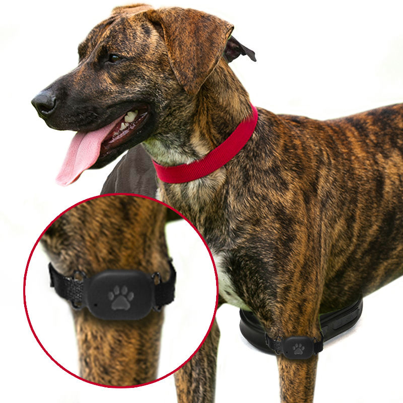 chip rastreador de animales gps tracker collar for dog cat pets