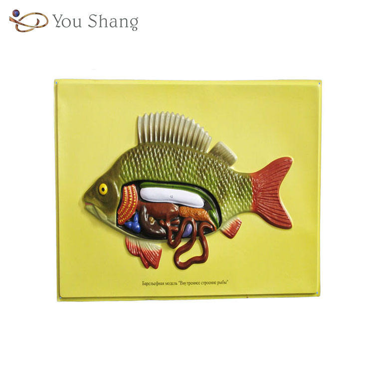 Biology Teaching Aids Anatomical Bas Relief Model of Fish's Internal Structure