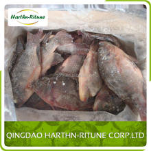 Best Fresh Frozen Tilapia Whole Gutted Scaled Fish