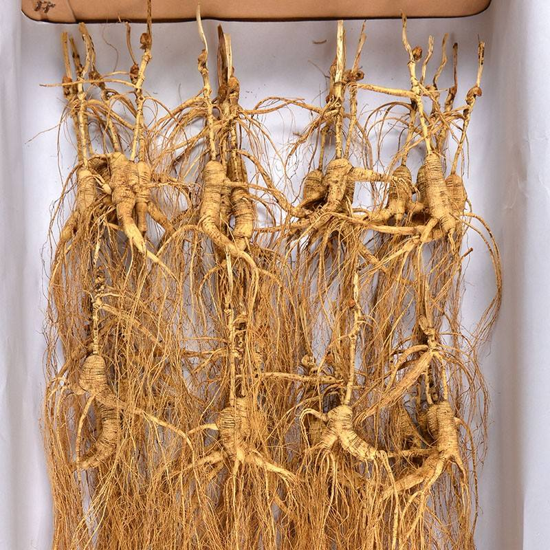 Dry ChangBai Mountains Wild Ginseng Root Transplant Wild Ginseng