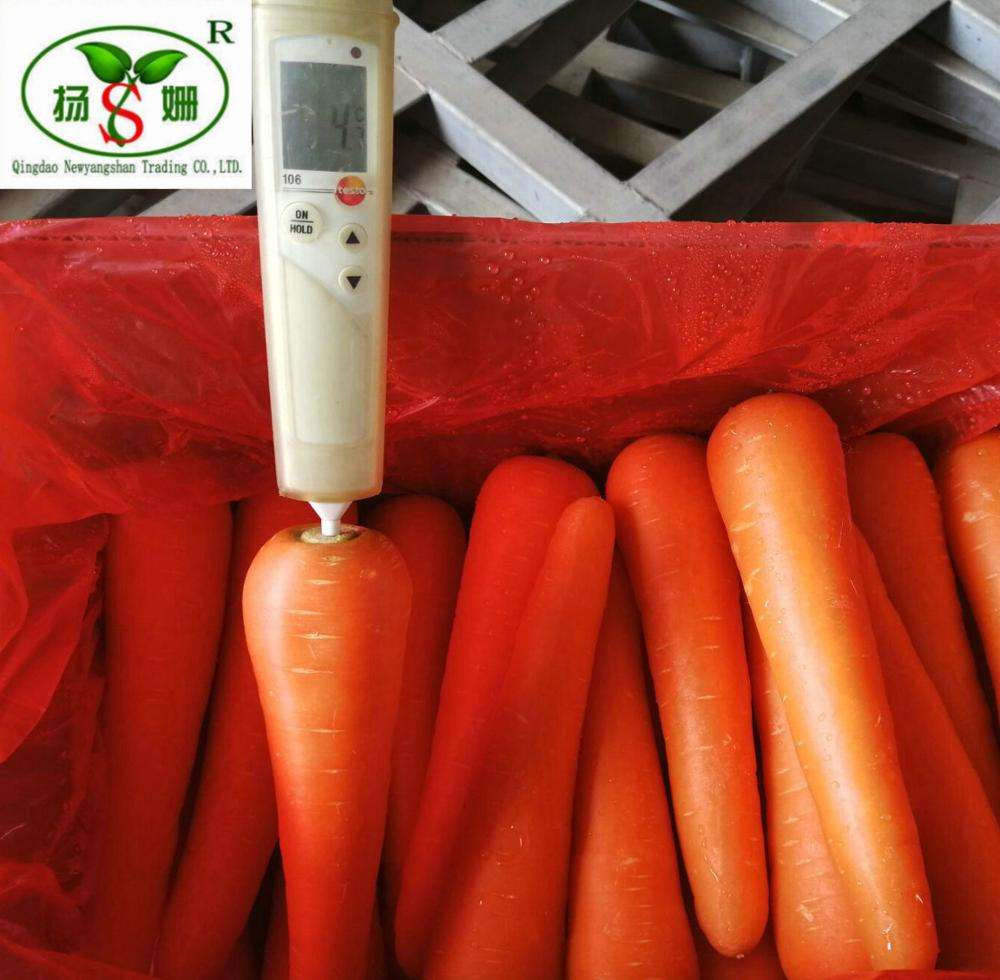 (HOT) Fresh Carrots Low Price for sale in China