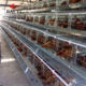 Used Layer Chicken Battery Cages for Laying hens