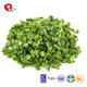 TTN Sales Low Price Freeze Dried Chive