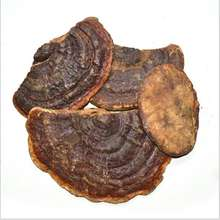 Ling Zhi ISO Manufacturer Supply High Quality Red Reishi Mushroom Extract