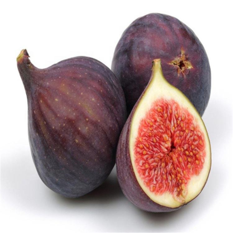 High Quality Fig fruit stem cutting for planting