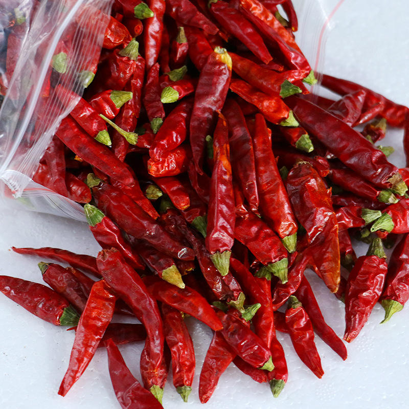 Factory Supply Spices Super Hot Spicy Chili Pepper Red Chilli Exporters