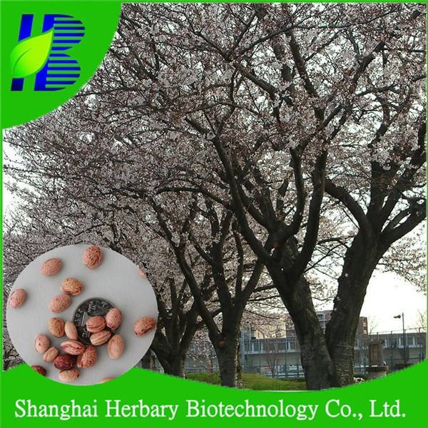 2021 Latest Japanese Cherry Blossom Seeds/Fresh Sakura Seed For Planting