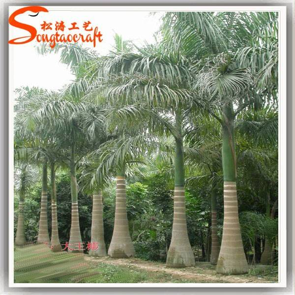 Chinese 18ft palm tree plants royal palm tree looking natural