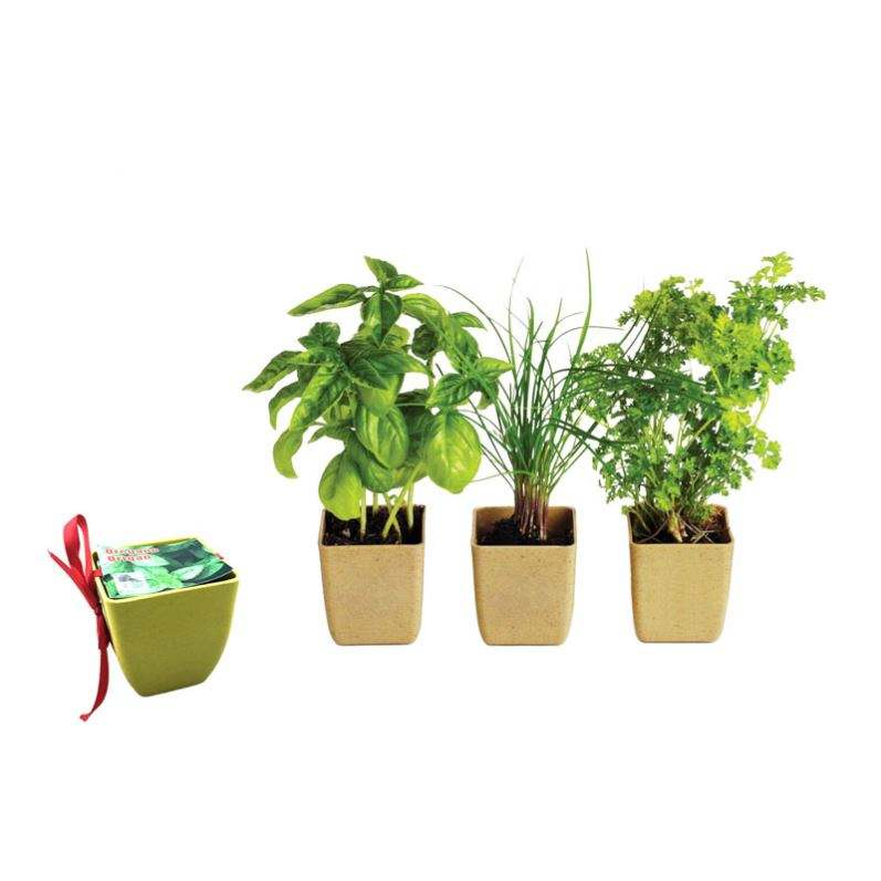Indoor Herb Garden Starter Kit Potting Soil,Peat Pots DIY Kitchen Grow Kit for Growing Herb Seeds Indoors