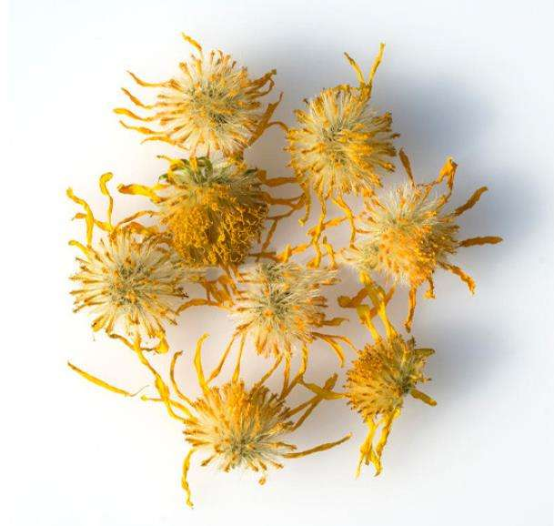 High quality Arnica montana flowers dried for herb and tea