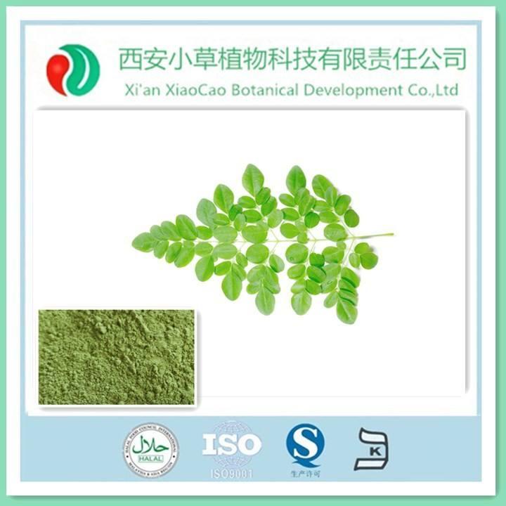 Heißer verkauf organischen moringa oleifera lam./100% reine Meerrettich blatt p. E