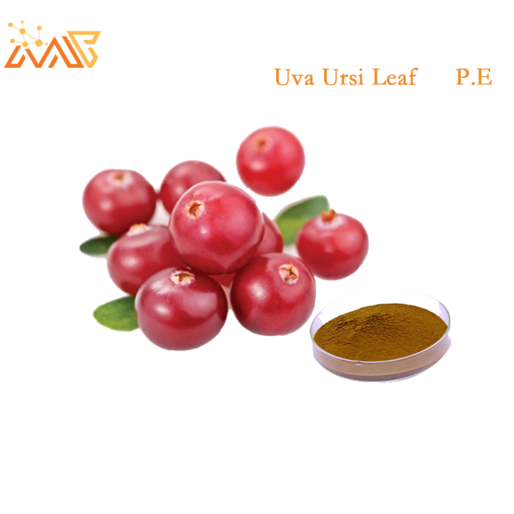 Organic Bearberry Leaf Extract Alpha Arbutin 98%