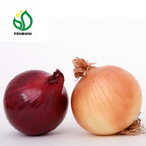Fresh Red Onion Sale from China