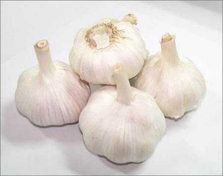Supply New Crop Fresh garlic