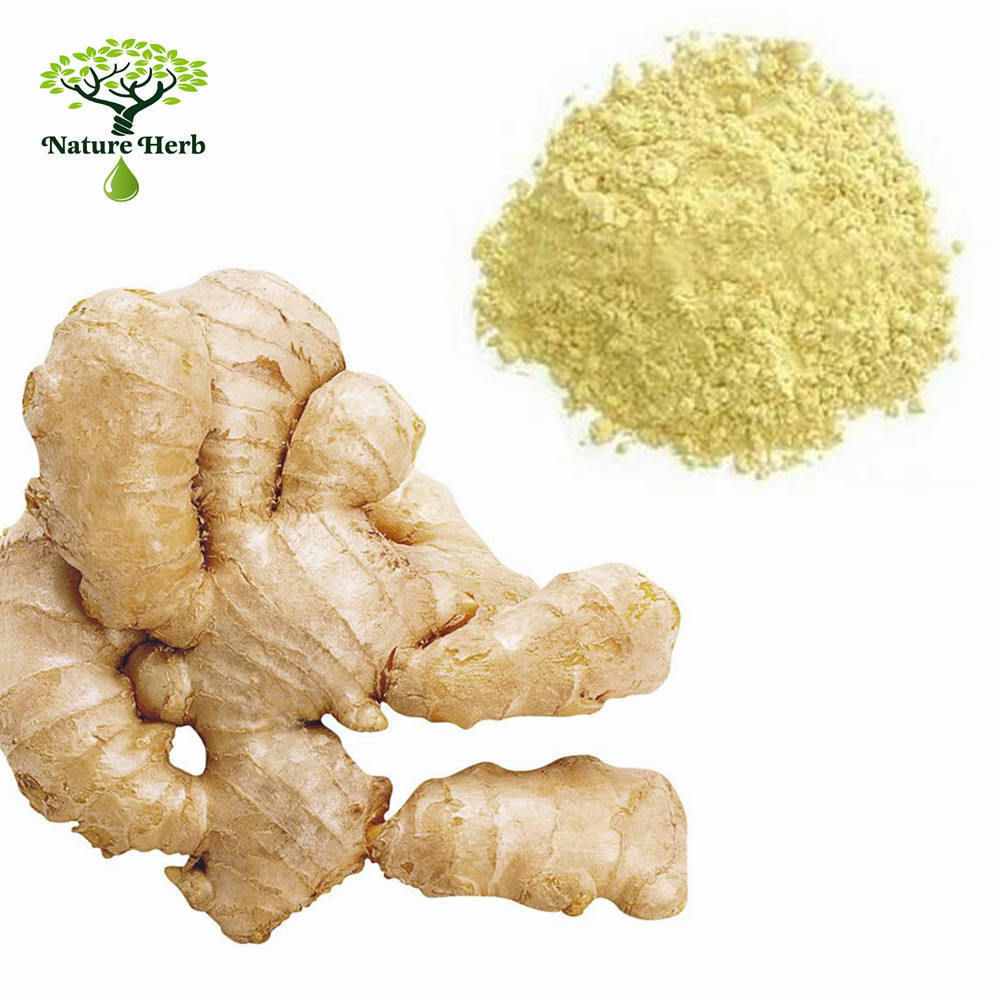 Ginger Extract ISO/GMP Organic Ginger Root Extract Powder Gingerol 20%