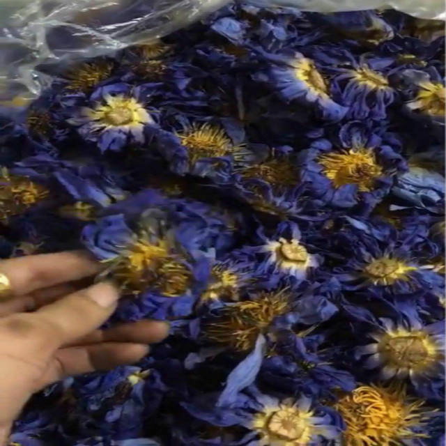 Natural Dried Blue Lotus Flower Petals