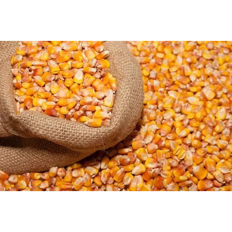 Rich in various nutrients corn popcorn for