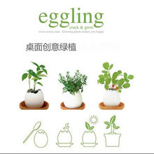 Indoor Herb Garden Kit Great for Growing an Indoor Herb Garden, Includes Everything You Need to Grow a Herb Garden
