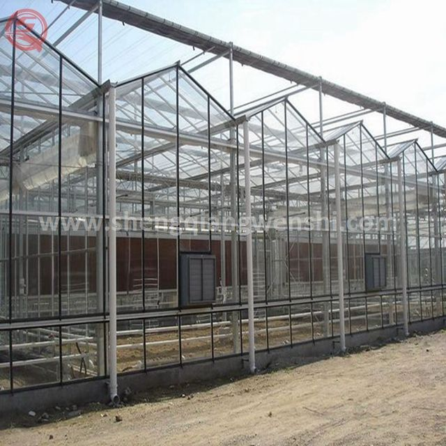 Strong Structure Galvanized Venlo commerical polycarbonate agricultural garden green houses with good price