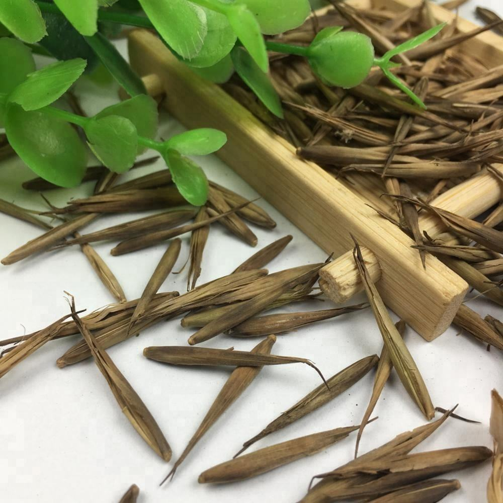 Phyllostachys Edulis Seed The Best Forest Moso Bamboo Seeds For Planting