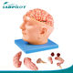 9 Parts Detachable Brain with Arteries on head, Head Model, Brain Model