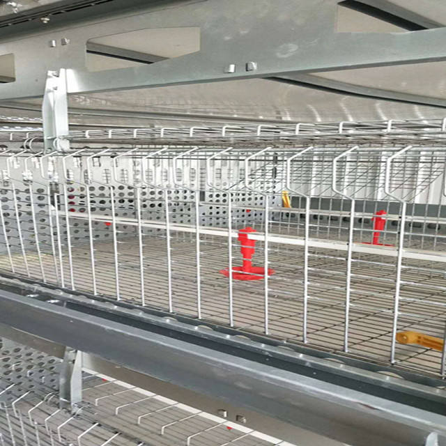 Chicken farming A types of layer chicken cages for zimbabwe poultry farms