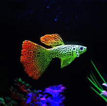 Artificial Floating Swimming Aquarium Plastic Fish