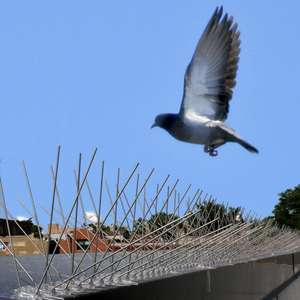 YARNOW 5 Unidades de Pinchos de Acero Inoxidable para P/ájaros Pinchos de Acero Inoxidable para Palomas Pinchos de Control para Aves Pinchos Repelentes para Cercas Techos Ventanas de