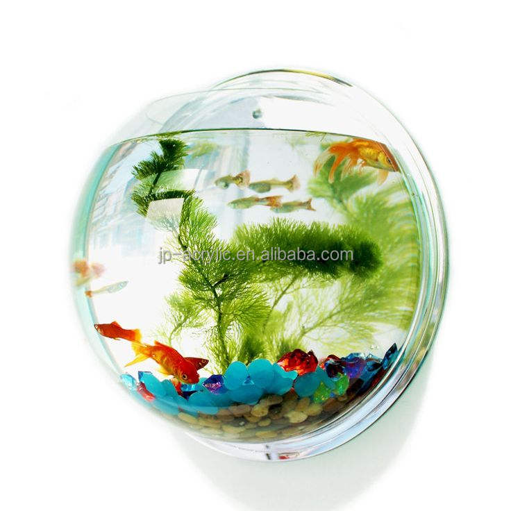 Indoor Small Acrylic Fish Tank Wall Hanging Fish Bubble Aquarium Plant Pot Wholesale Acrylic Wall Mounted Fish