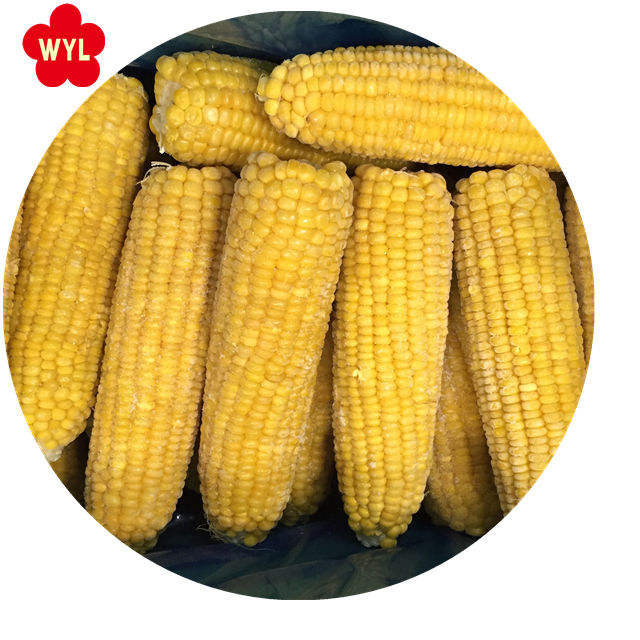 Best price IQF frozen sweet corn on the cob