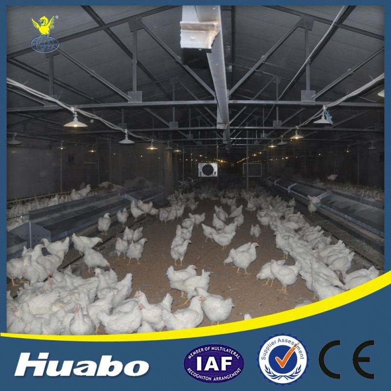 Gallinero Aves Alimentador Automático de Ponedoras de Huevo Nido
