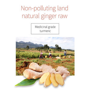 China factory 보건부 (health care 인삼 ginger 차 natural 인스턴트 ginger 차 분말 bag 의 인삼