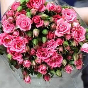 Professional Wholesale Fresh Cut Sprayed Rose Pink Flower For Sale