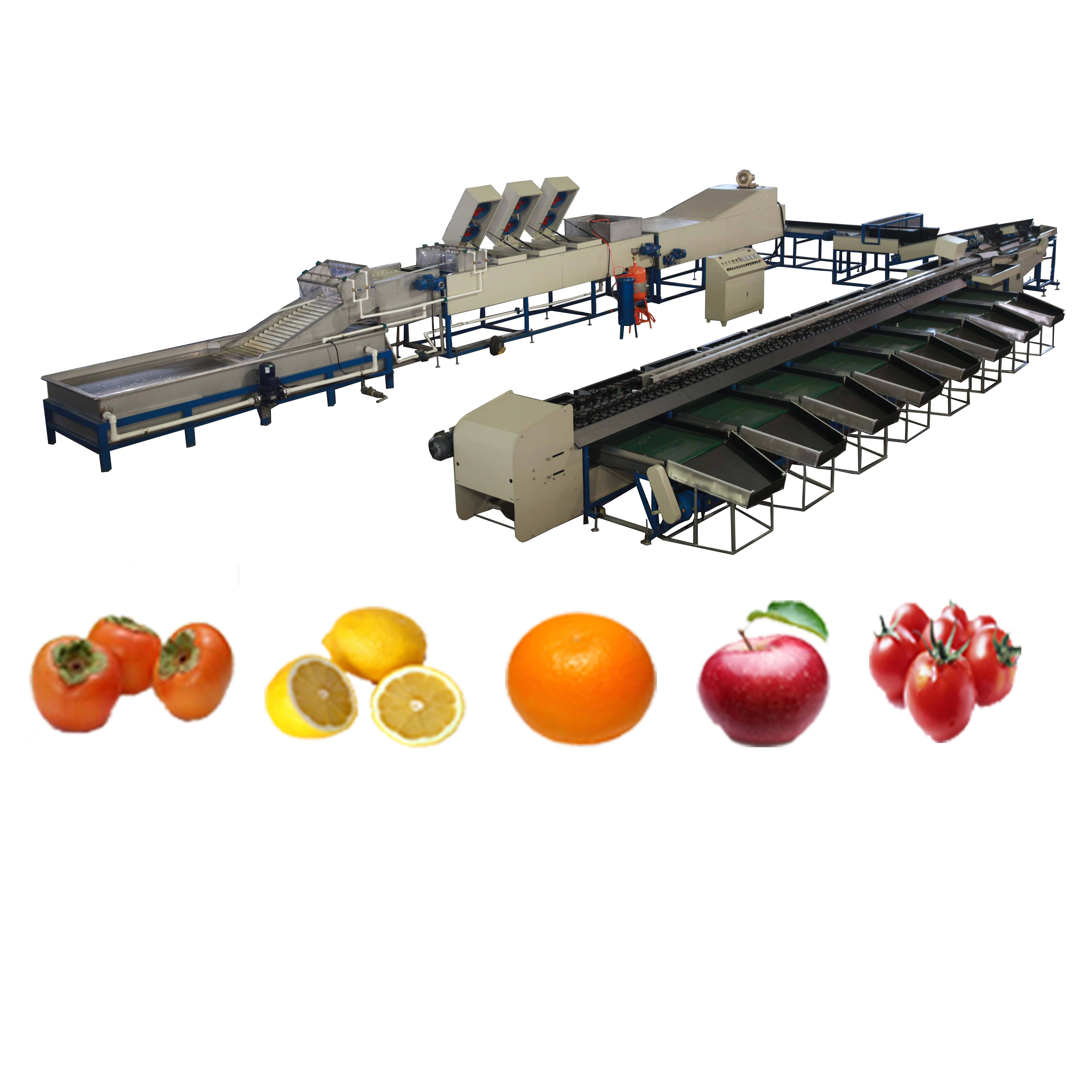 FACTORY OUTLET(FUSHI BRAND) FRUIT&VEGETABLE PROCESSING WASHING WAXING AND SORTING MACHINE