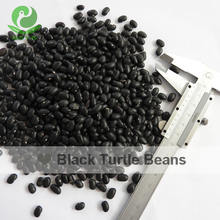 Export Chinese natural Black turtle kidney beans