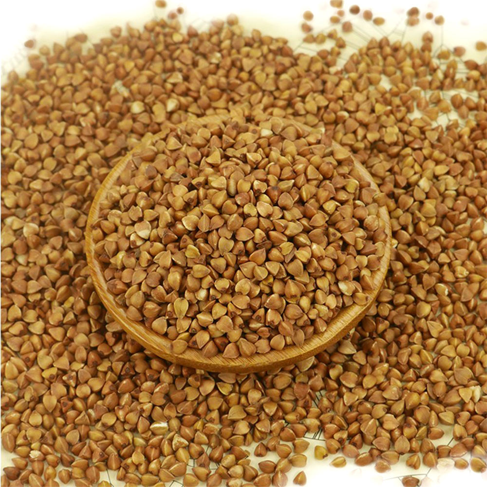 roasted buckwheat kernel unhulled with best quality and competitive price