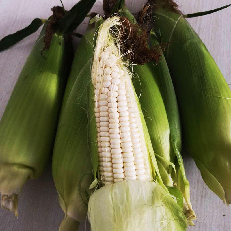 2020 New Arrival Hybrid F1 Sweet Corn Seed For Growing