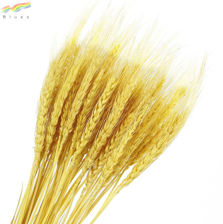 Dried Wheat Stalks Wheat Grass Bouquet Bundle Flower for DIY Home Table Wedding