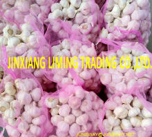 Jin Xiang Chinese Normal White Fresh Garlic in 10kg mesh bag Packing