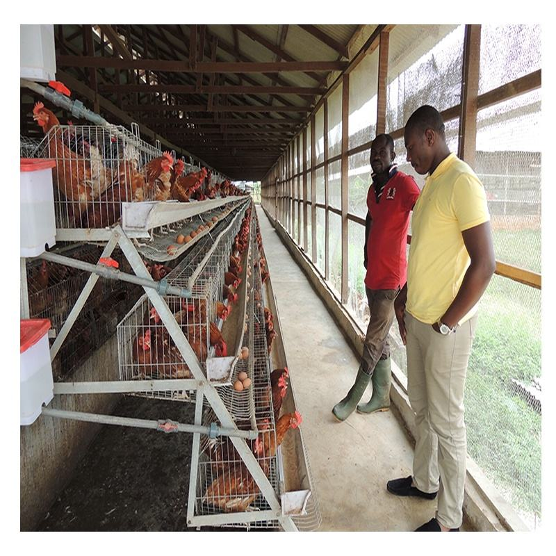 Best Price Poultry Farming Equipment Battery Chicken Layer Cage For Sale