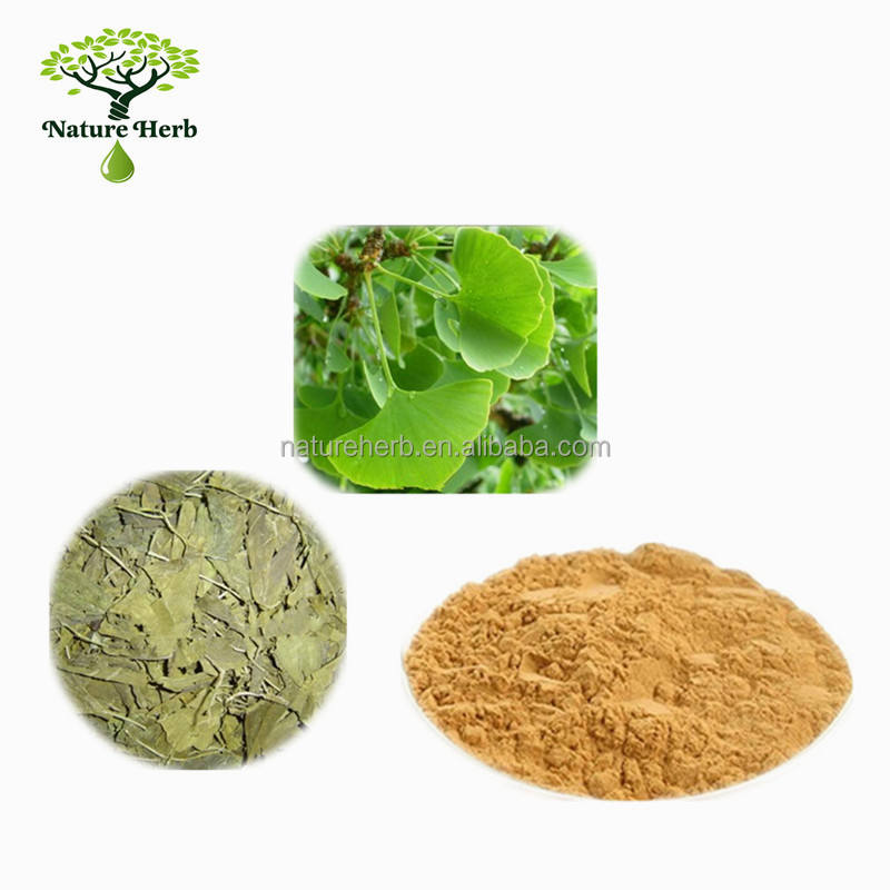 Nutritional Supplements Ginko Flavones Ginkgo Biloba Leaves Extract