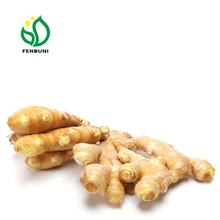 Chinese Mature Fresh Ginger For Sale(Mesh Bag Packaging)
