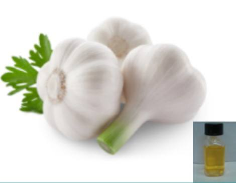 Farwell Garlic Seed Oil CAS 8000-78-0