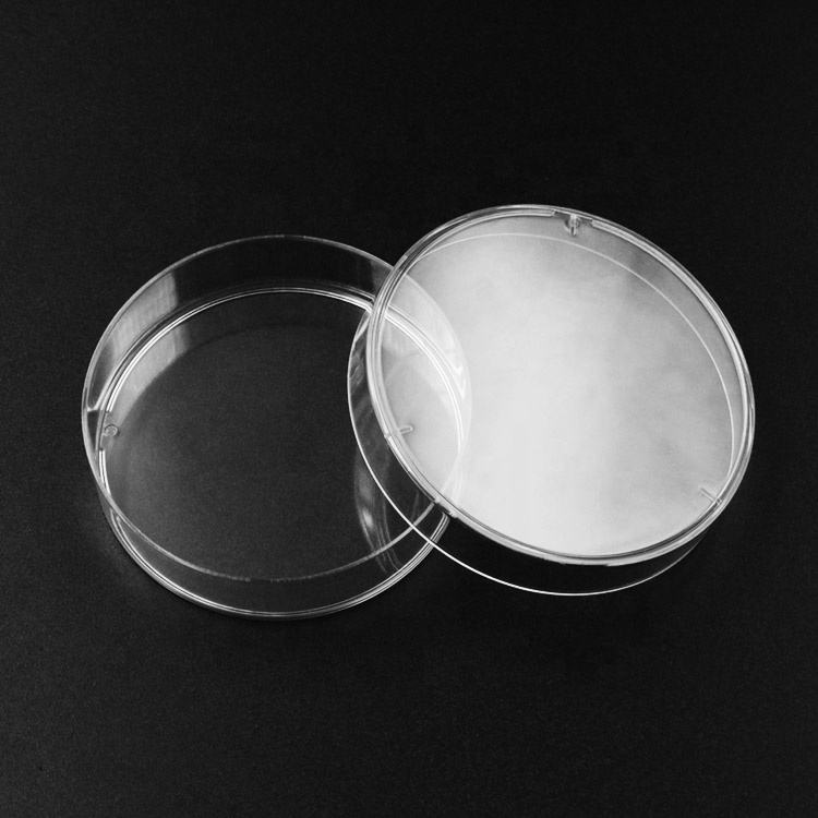 The Biggest 200mm Glass Petri Dishes Plate
