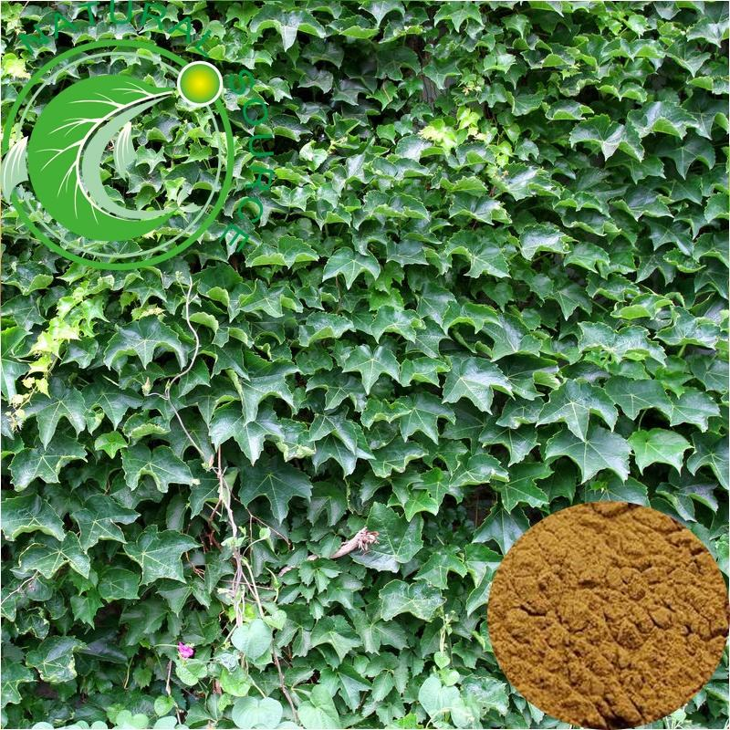 High Quality Hot Sale GMP Natural Chinese Ivy Leaf Hedera Helix Extract Powder