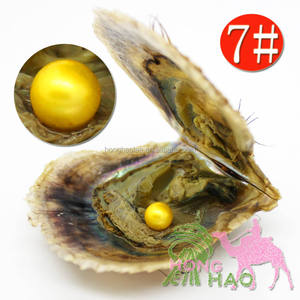 AAAA grade 6-7mm7# color pearls are put in Akoya salt pearl oysters, vacuum packed and transported (free shipping by DHL)